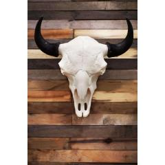 Cast Buffalo European Mount