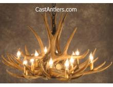 Mule Deer 9 Cast Antler Chandelier