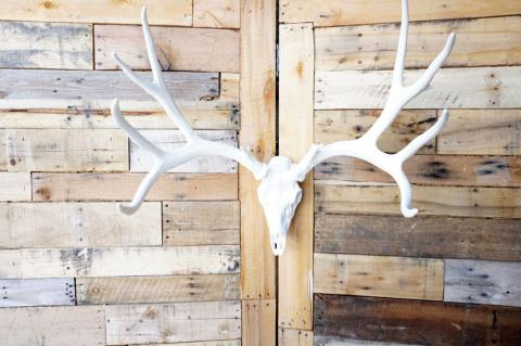 **Pure White** Cast Mule Deer European  Mount