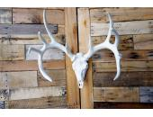 **Pure White** Cast Whitetail Deer European Mount