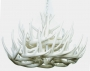 **Pure White** Whitetail 21 Cast Cascade Antler Chandelier