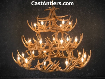 Whitetail 42 Cast Antler Chandelier