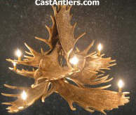 Moose Antler Chandelier Lighting